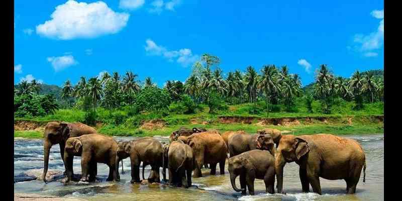 10 Tempat Wisata Paling Top di Sri Lanka - Pinnawala Elephant Orphanage