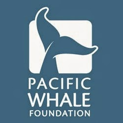 coral reef program, pacific whale foundation, maui hawaii