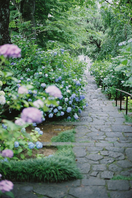 way to the temple, lots of lots of colorful hydrangeas :)