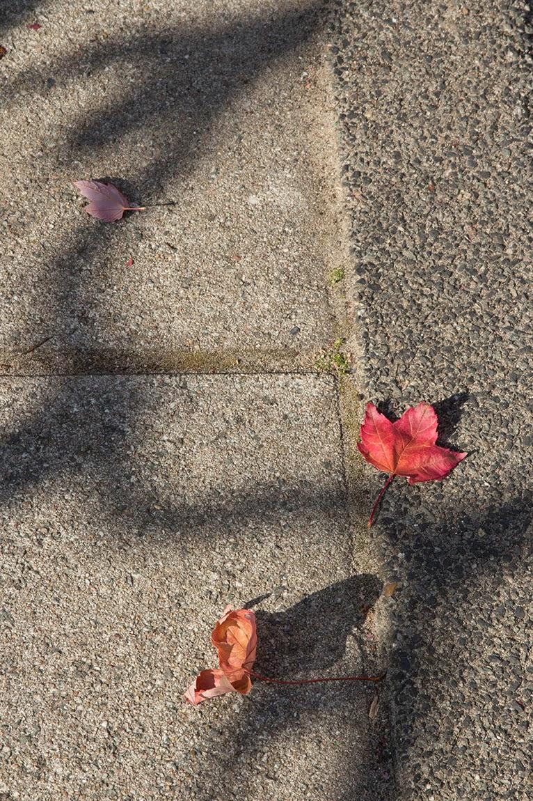 shadow of bike's steering wheel and red leaves