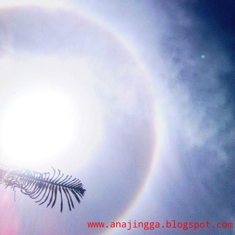fenomena halo matahari