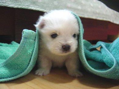 cute_dog.jpg