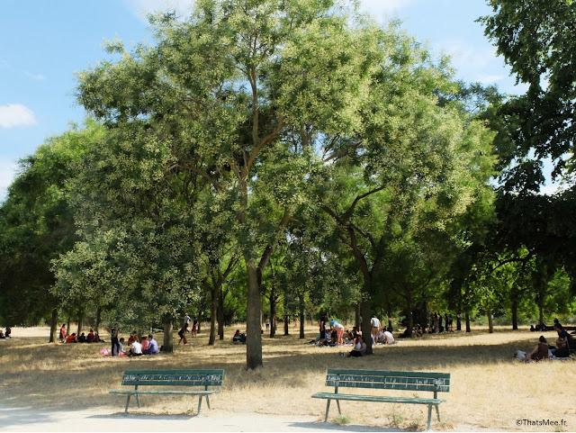 Bois de vincennes arbre