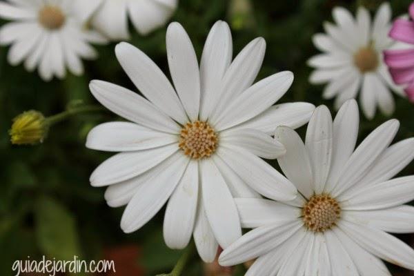Clasificaci n y nombres de las plantas guia de jardin - Nombres de plantas de jardin ...