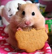 Crafty Little Hamster