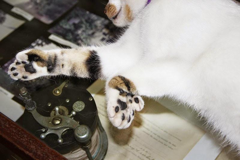 6-toed cats