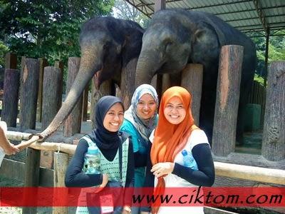 Aktiviti wajib- bergambar bersama gajah