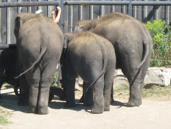 THE 3 ELEPHANTS