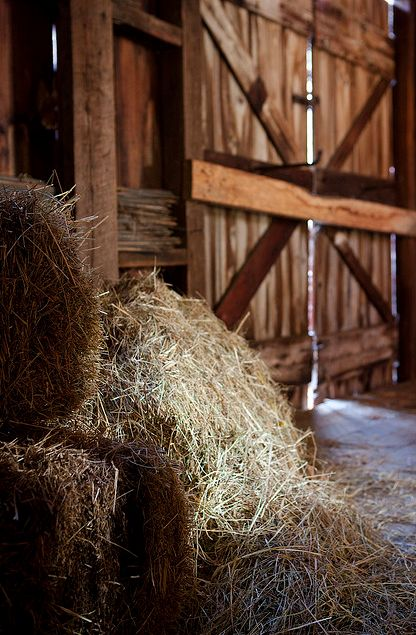inside barn background. one of the most fun aspects writing skeleton king has been leaning on my real world equine experience to build emmie\u0027s background. inside barn background a