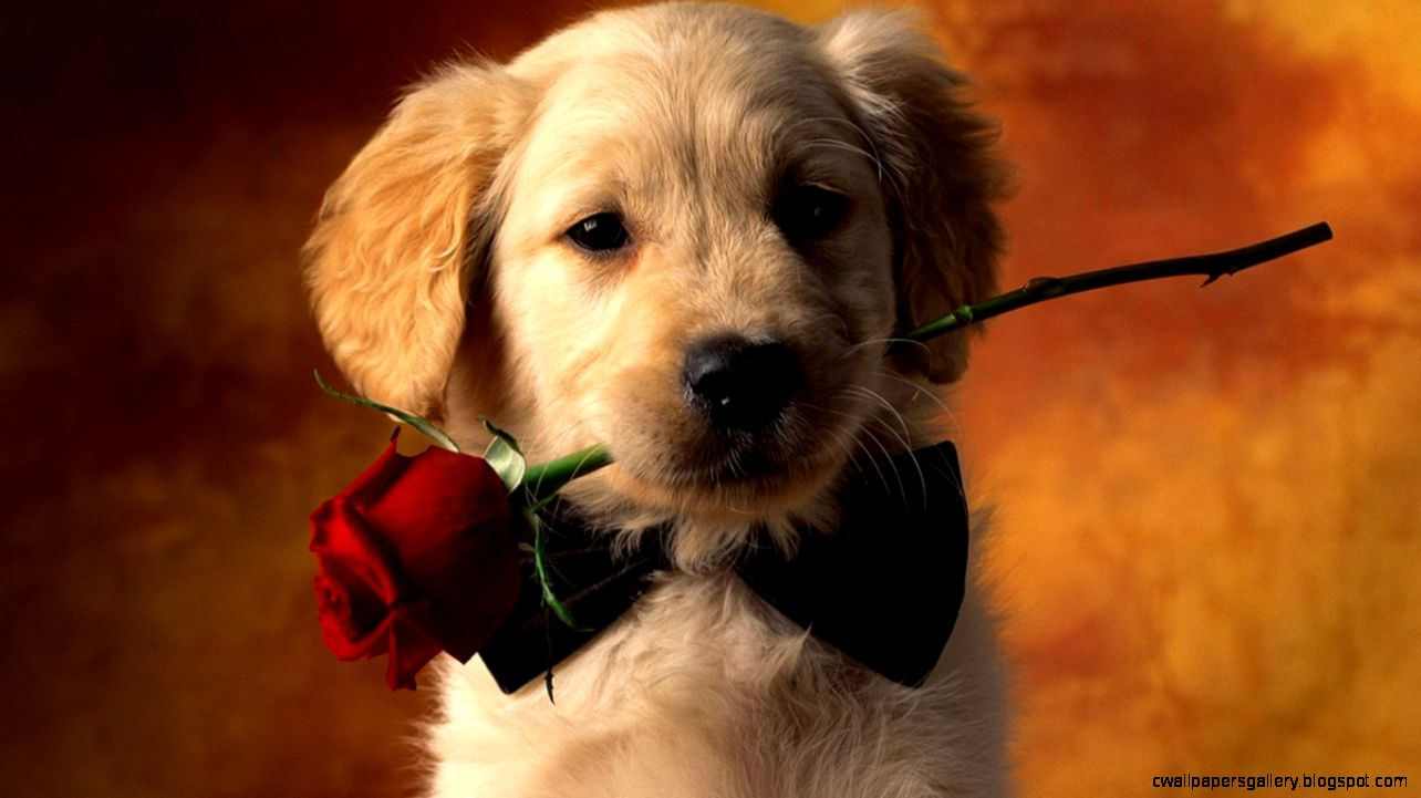 Animals Love 6979217
