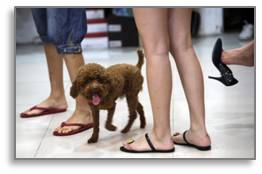Airplane passengers, flip flops, heels, dog