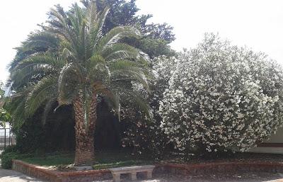CLAVE DICOTÓMICA PLANTAS