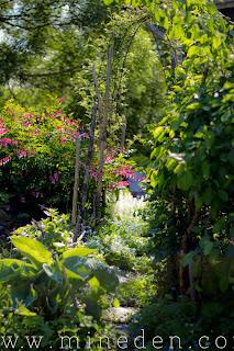 A secret garden