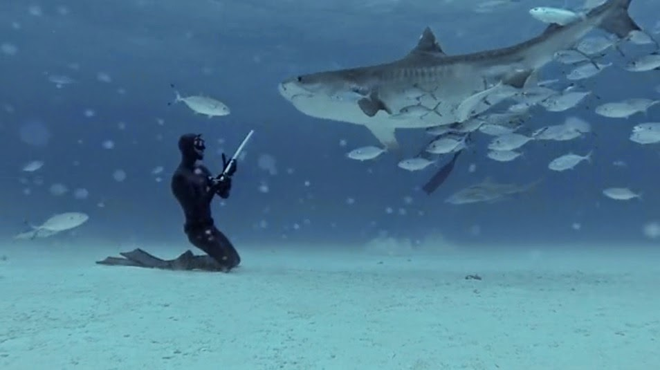 Eusebio and Christina Saenz de Santamaria freedive with tiger sharks at Tiger Beach in the Bahamas