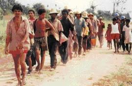 Brasil não consegue erradicar trabalho escravo