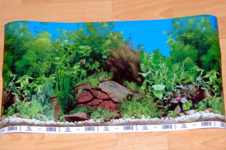 Aquarium Background Scenes Background Desktops Pics