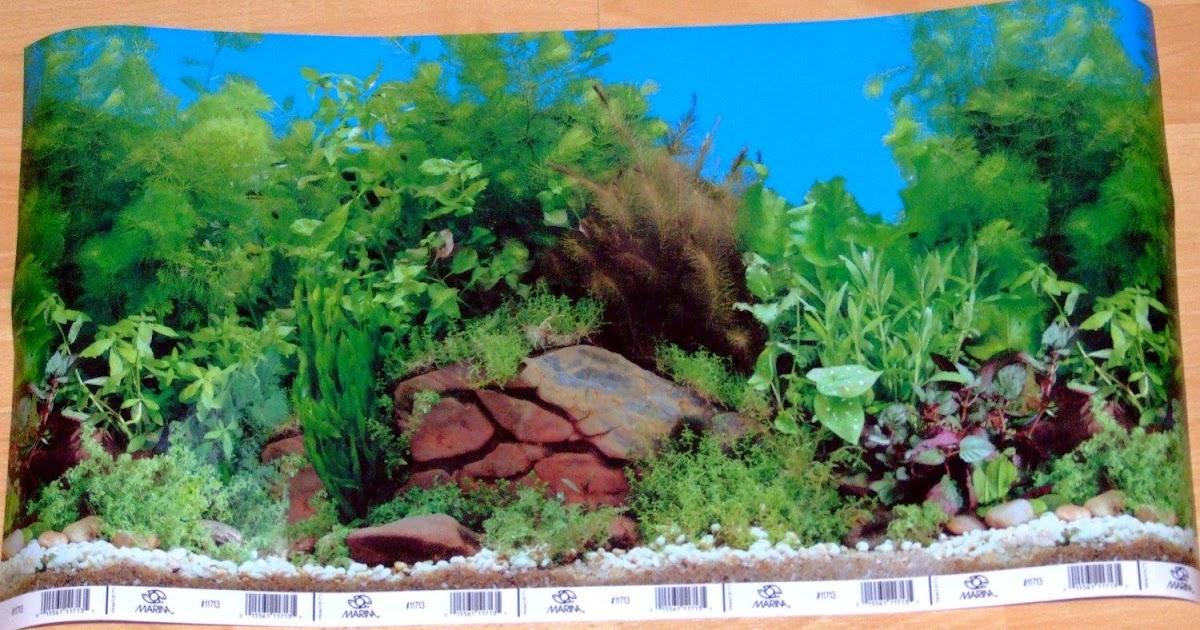 aquarium background scenes