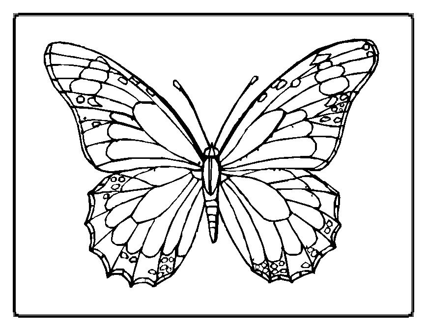 Butterfly coloring pages team colors for Butterfly coloring pages