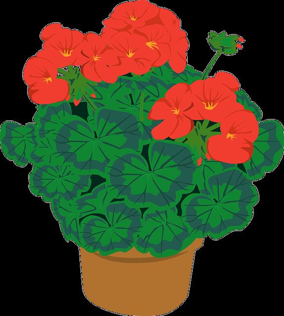 de magische geranium
