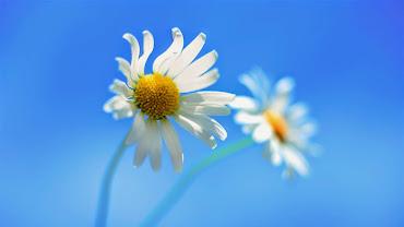 #4 Delightful Flowers Art