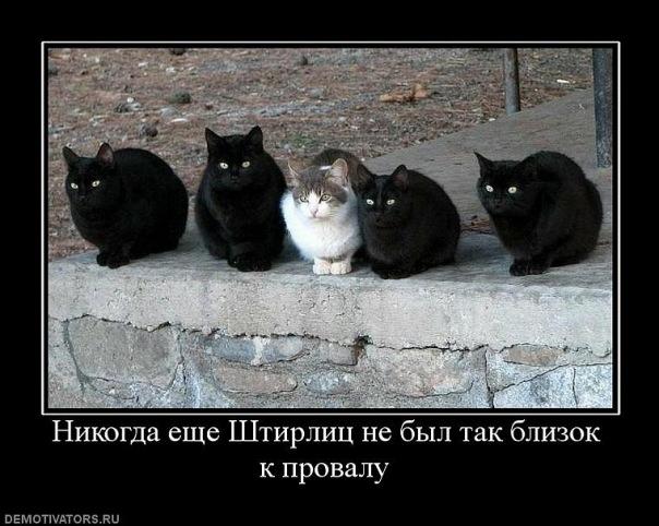 Новые демотиваторы с котами
