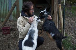 Yellow Ostrich Michael Tapper goats