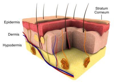 Skincare | elure | Skin Brightening
