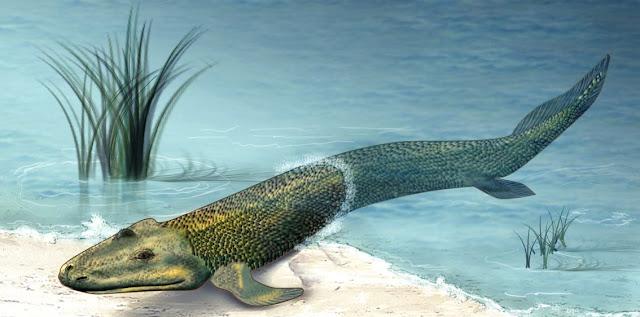 Paso de la vida acuatica a terrestre y biologia