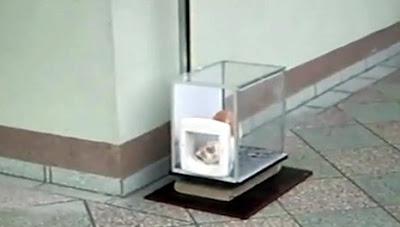 猫エレベーター