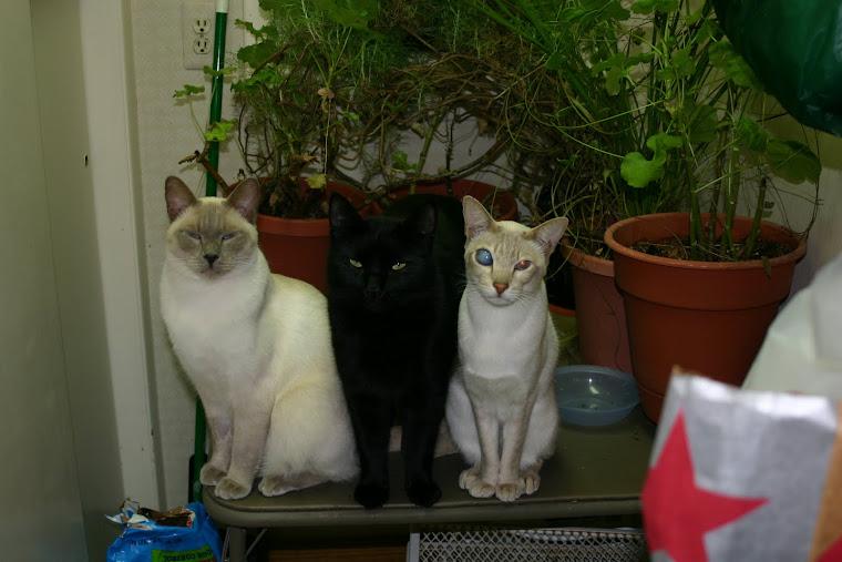 Les Chats de la maison