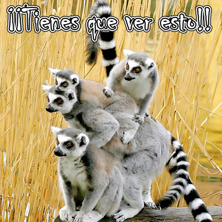 Tarjetas de animales - Facebook Gratis