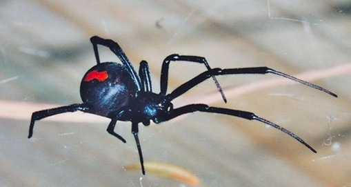 ENCYCLOPEDIA OF ANIMAL FACTS AND PICTURES Spiders