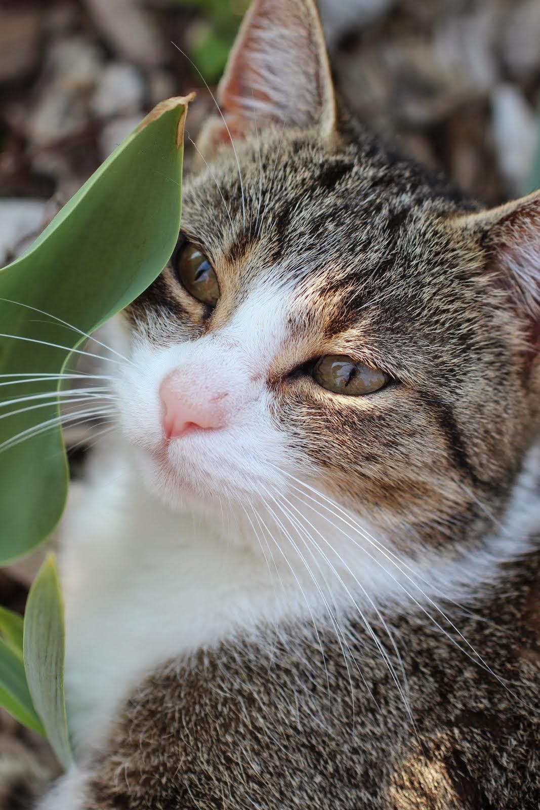 Meidän kissat