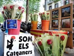 Els catganers per Sant Jordi.