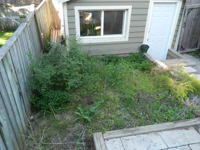 Xeriscape Leslieville garden install before  Paul Jung Gardening Services Toronto