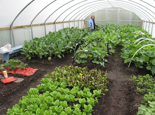 Gardening, Kodiak, Kodiak Island, hoophouse, high tunnel, vegetables, garden, beds, agriculture