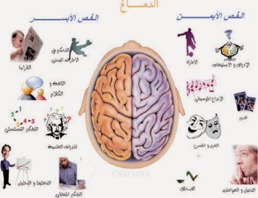 هروغليفيا الدماغ: الخريطة الذهنية