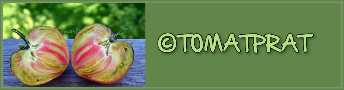 TomatPrat