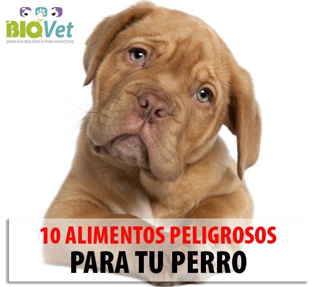 Medbiovet pereira 10 alimentos prohibidos para perros - Alimentos recomendados para perros ...