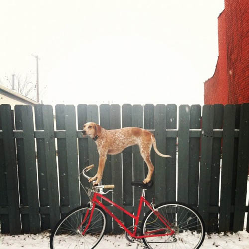 Madie on things - cão - bicicleta
