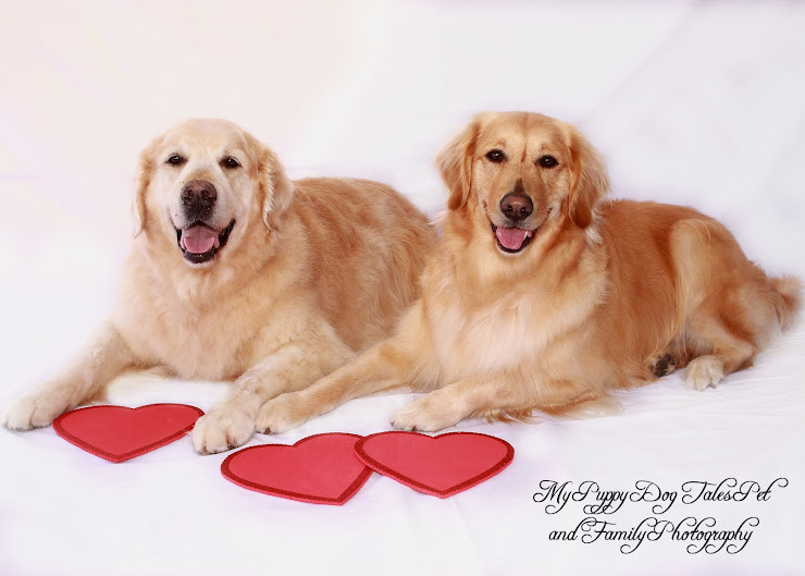 Valentine Photo Opportunities Coming