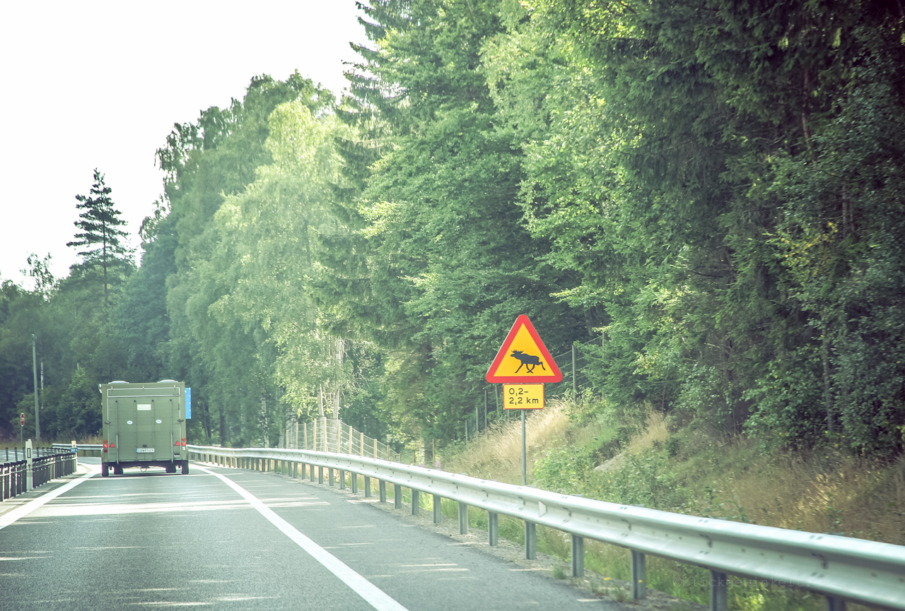 Schild Warnung vor Elchen