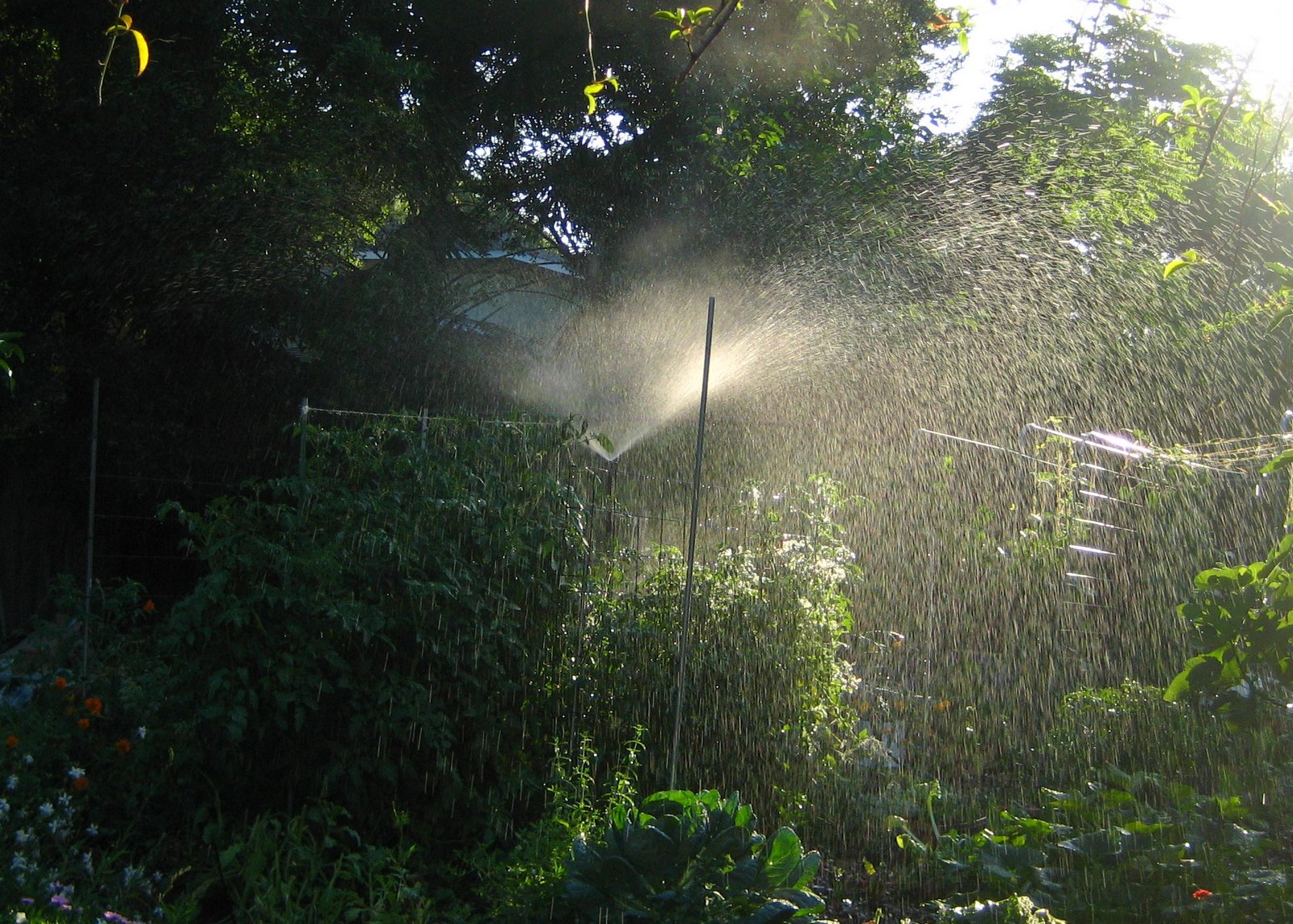 Gardening in central florida how to water a vegetable for Watering vegetable garden