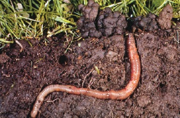 Strike rattle roll guest post farming with earthworms for Organic soil solutions