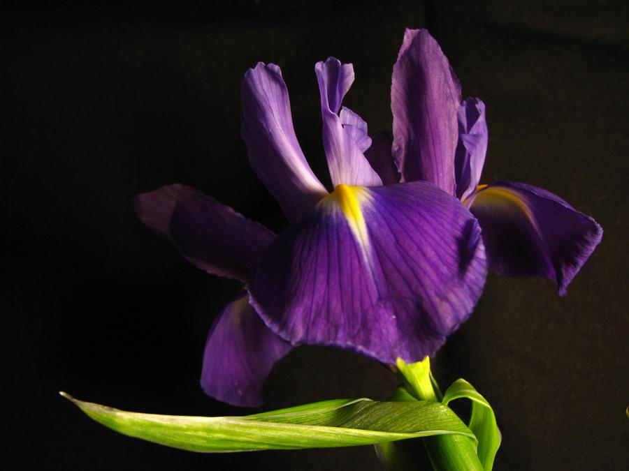 Назван цветок
