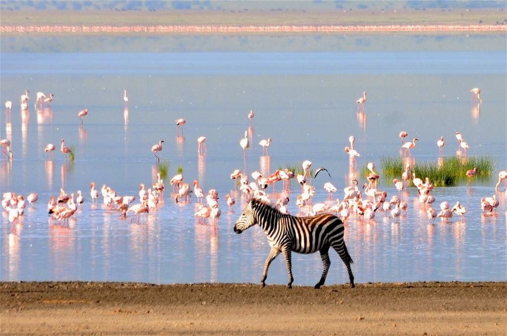 Manyara lake, Manyara meer, flamingo's, zebra, waterplas, Afrika, Tanzania, Oost-Afrika,