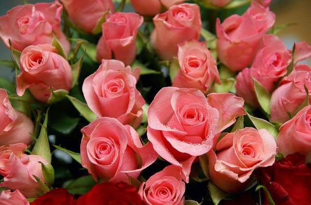 Happy Rose Day 2017 Wishes For BF GF