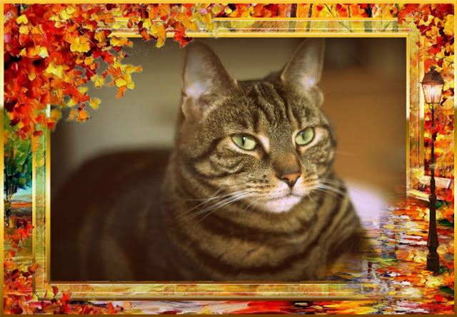 Tabby cat autumn