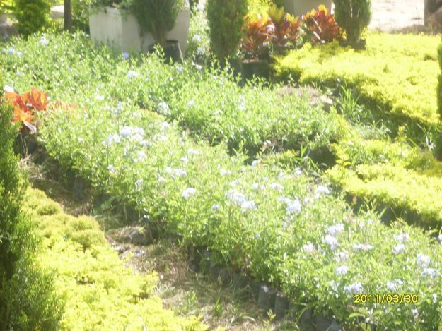 plantas mi vivero visitanos nuestras intalaciones te