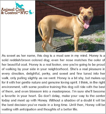 Freckles the Dog and Honey New York Animal Care and Control